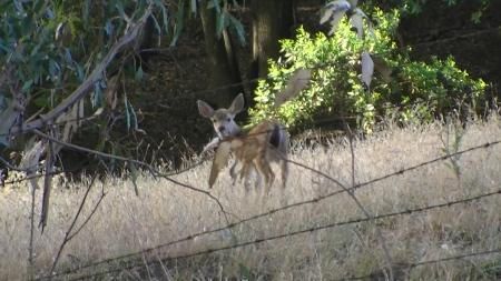 Deer baby 2