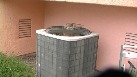 Dotty on nest.MTS.Still002