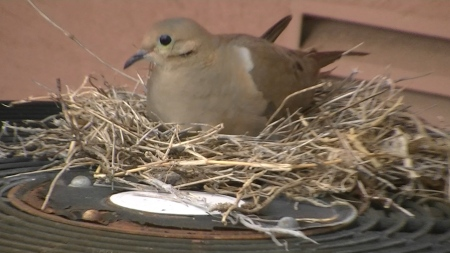 Dotty on nest.MTS.Still003