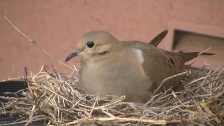 Dotty on nest.MTS.Still004