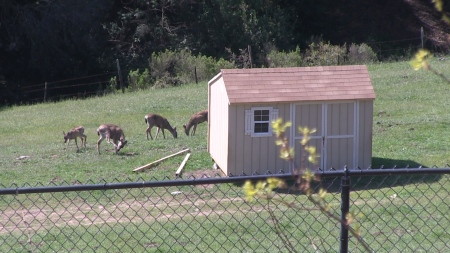group of deer -2