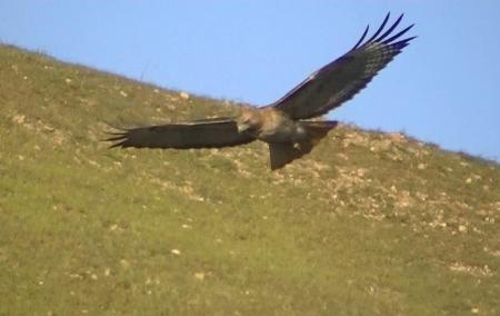 Hawk looking down copy