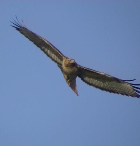 Hawk turn in air copy