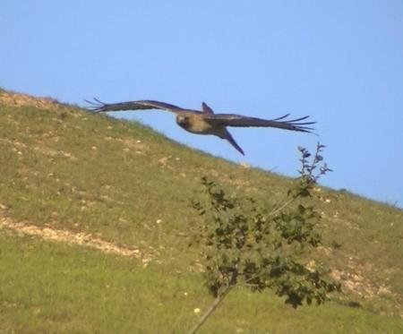Hawk turn in mid ar copy