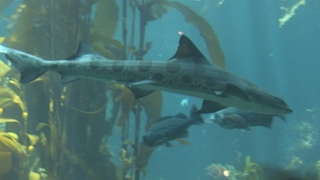Shark and other fish
