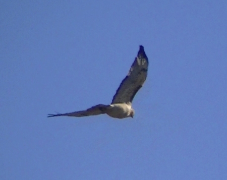 Hawk overhead copy