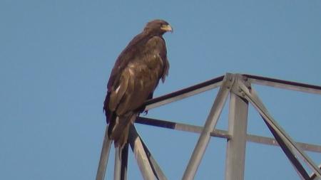 eagle-still001